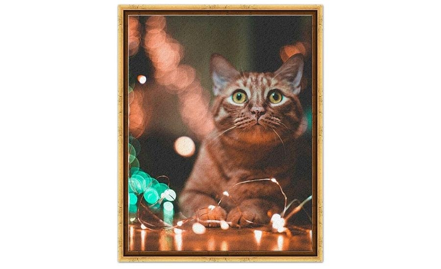 Cat with Twinkle Lights
