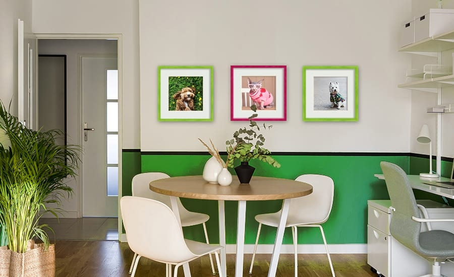 Brightly colored picture frames with dog photos