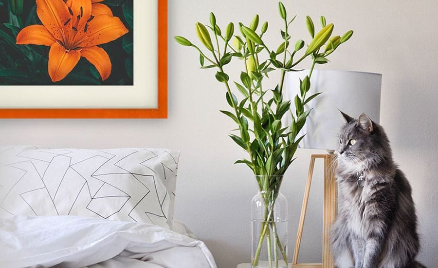 Flower Photo with White Mat and Orange Picture Frame